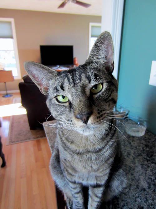 feline behavior mirrors code review
